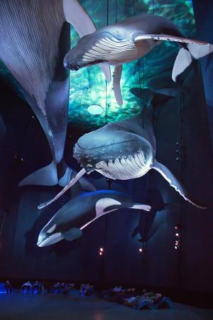 alt: V Ozenaeu můžete obdivovat úchvatné modely mořských gigantů.