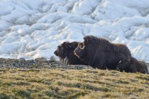 alt: Grónsko není pouze ledová poušť bez života. Foto Marie Bulínová.
