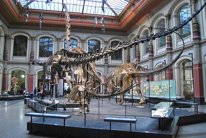 alt: Dinosauří kostry v berlínském Přírodovědném muzeu. Zdroj English Wikipedia, autor ilja.nieuwland, licence CC BY 3.0.