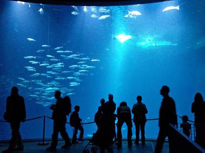 alt: V Ozeaneu můžete obdivovat živé ryby...
